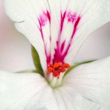 Staande Geranium sur Ronne Vinkx