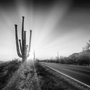 SAGUARO NATIONAAL PARK Ondergaande Zon | Monochroom van Melanie Viola