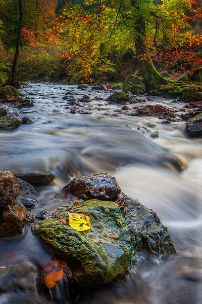 Rivierbedding in herfstkleuren van Peter Bolman