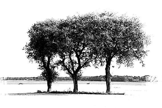 three of a kind van Yvonne Blokland