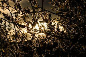 Gouden zonlicht van Licht! Fotografie