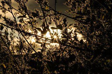 Goldenes Sonnenlicht von Licht! Fotografie