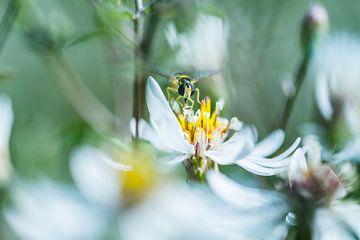 Wesp in de bloemen van Nanda Bussers