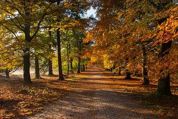 Herfst op de Lemelerberg van Charlene van Koesveld