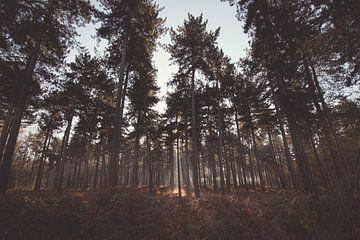 Vroege herfstmorgen in het Kloosterbos bij Wachtebeke, België van Daan Duvillier
