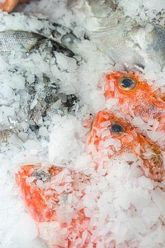 roher Fisch auf Eis von Stefania van Lieshout