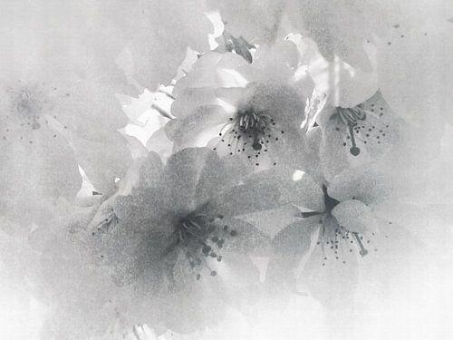 Japandi no. IX