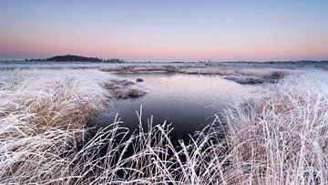 Cold morning Haaksbergerveen von Davy Sleijster