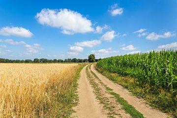 Landschap in Nederland met zandweg en agrarische velden van Ben Schonewille