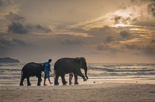 Olifanten op het strand