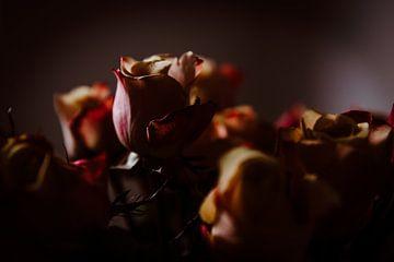 Roses von Marije Jellema