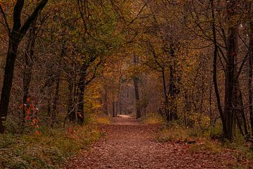 Herfstkleuren in het Mastbos