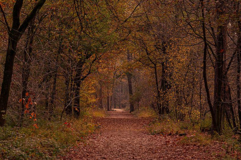 Herfstkleuren in het Mastbos van Ingrid Aanen