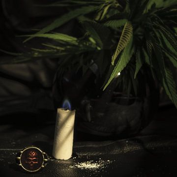 cannabis sur arjan doornbos