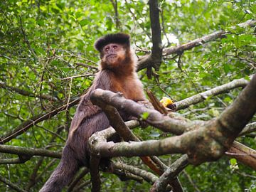 Singe dans le sanctuaire des singes sur Sanne Bakker
