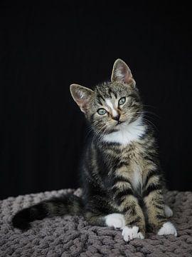 Zittende kitten
