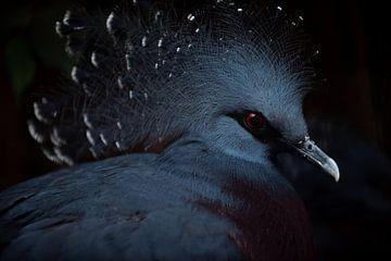 oiseau à crête