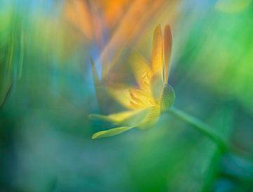 gelbe Blume von Remco loeffen