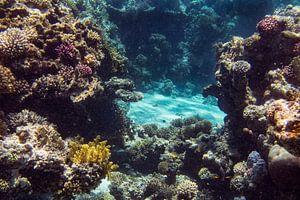 Straat tussen het koraal
