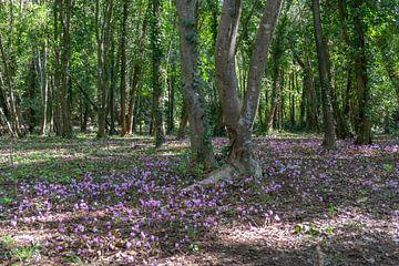 Paarse bossen in Krka Nationaal Park van Reis Genie