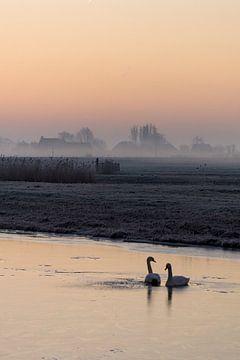 Zwanenliefde van Koen Boelrijk Photography