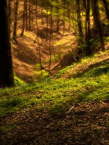 bosland