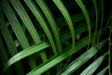 Palmenblätter von Myrthe Vlasveld