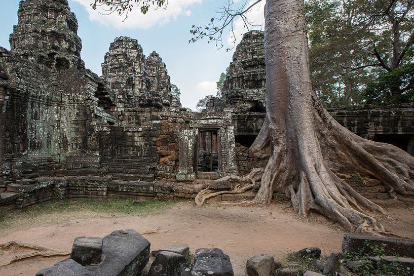 Ta Prohm tempel, Cambodja van Fleur Halkema