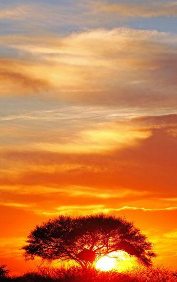 sunrise at Etosha National park, Namibia van W. Woyke