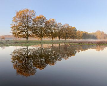 Mistige herfstochtend in De Ruigte, Broekpolder, Vlaardingen van Henno Drop