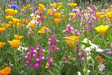 Kleurrijk veld wilde bloemen van Jeroen van Deel