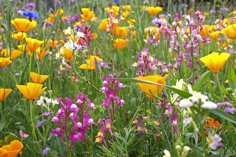 wilde bloemen par l'artiste jeroen van deel