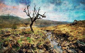 Aquarel van een solitaire boom in Schotland