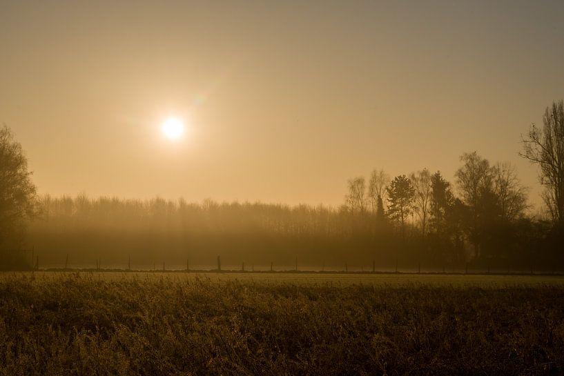Een magische ochtend in het bos van Jim De Sitter