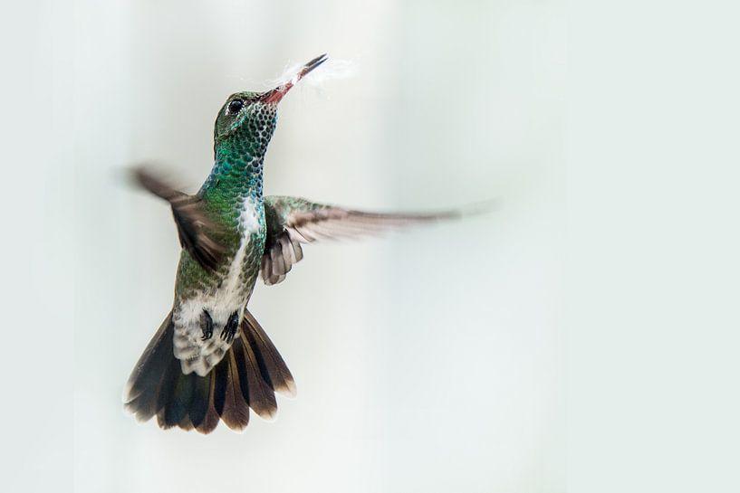 Kolibrie von Peter Reijners
