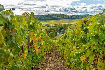 Zicht op dorp in de Champagne streek in Frankrijk met in de voorgrond druiven van Ivo de Rooij