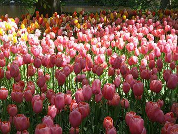 Keukenhof bloemen sur Veli Aydin