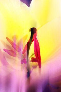 Tulpe Abstrakt van
