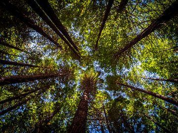 Bomen die tot in de hemel reiken in Rotorua van Rik Pijnenburg