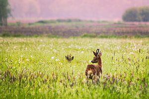Herten in het veld von