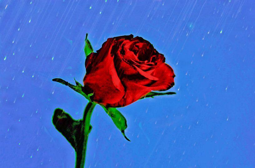 A Rose in the rain van Leo Huijzer