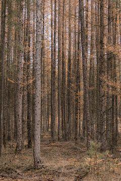 Den Wald vor lauter Bäumen nicht sehen (Teil 4) von Mascha Looije