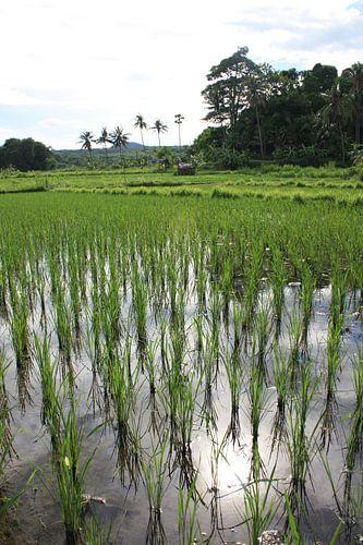 Rice van