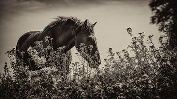 Pferd von Sylvia Duits-Hofland