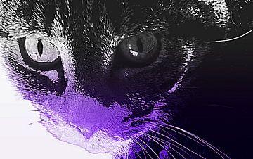 Kat van lindsay maka