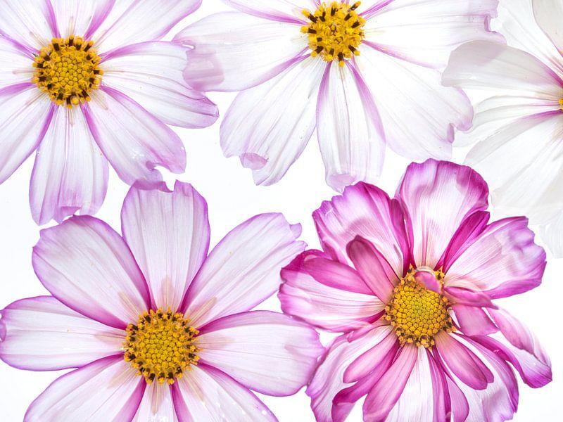 Blumenkraft von Christl Deckx
