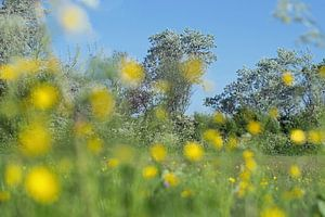 Lente met bokeh van boterbloemen  op de voorgrond van Judith Cool