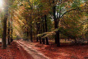 Herbst im Wald von Ronenvief
