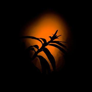 Plant Tijdens Zonsondergang van OutdoorPhotographing