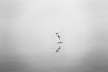 Libellen im Tandem von Ronald Mallant